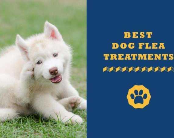 best dog flea treatments