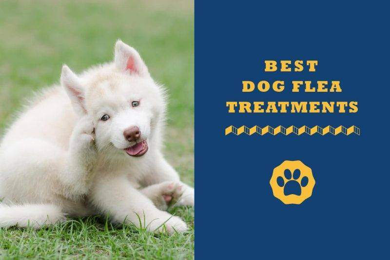 best dog flea treatments