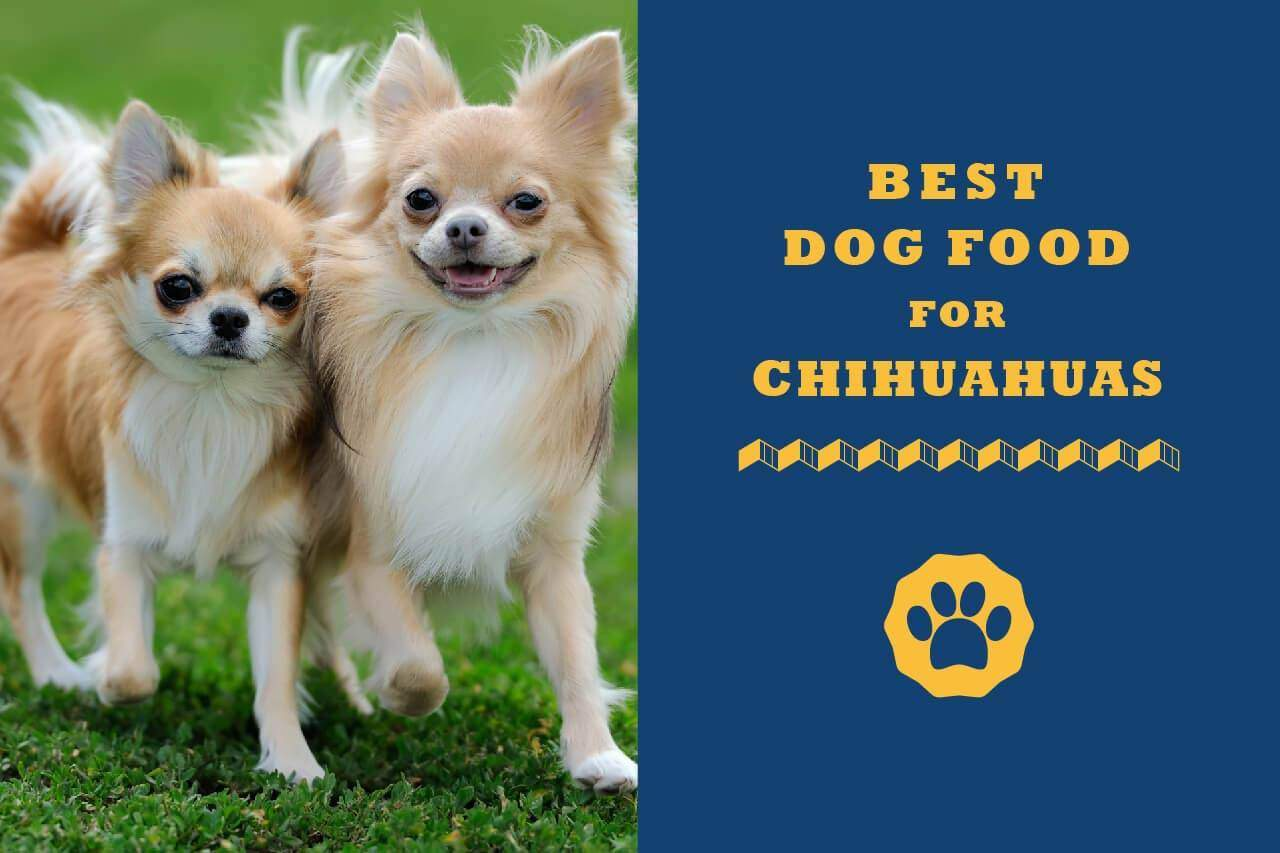 8 Best Dog Foods For Chihuahuas In 2020