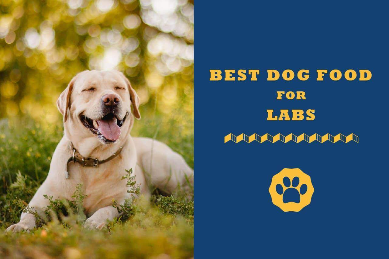 Best Dog Food For Labs >> 5 Best Dog Food For Labs In 2019 Totally Goldens