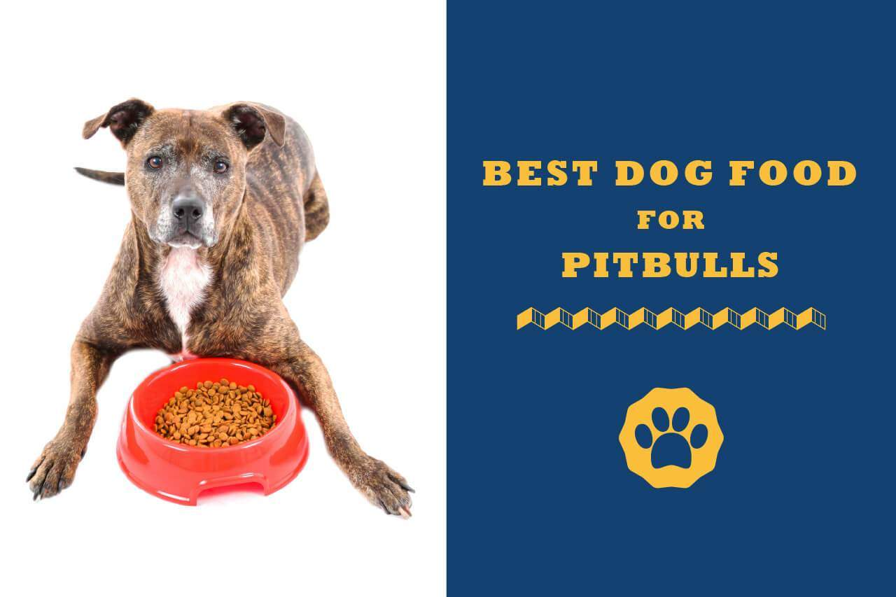 10 Best Dog Food For Pitbulls In 2020