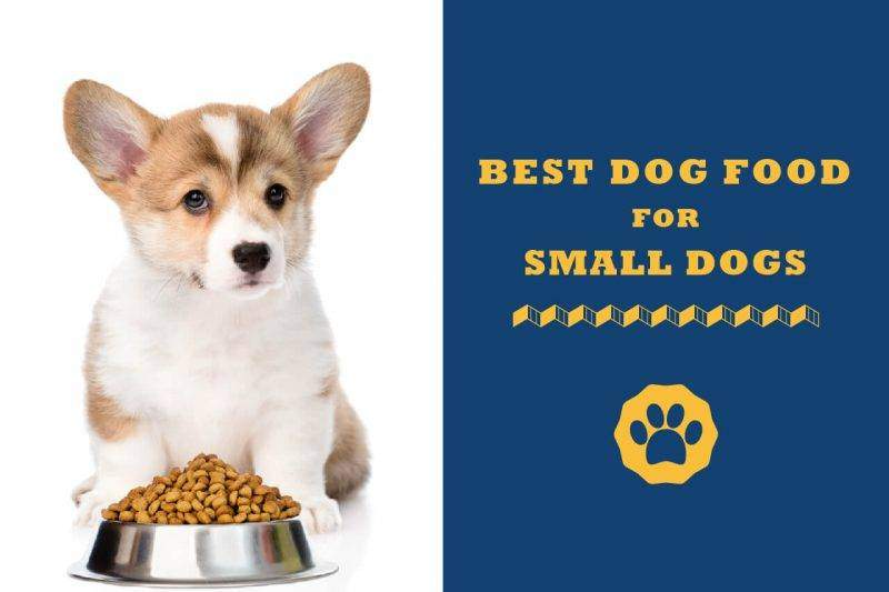 best dog food for small dogs