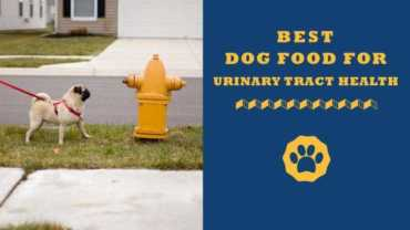 best dog food for urinary tract health