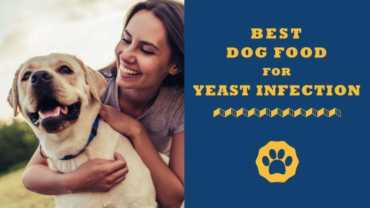 best dog food for yeast infection
