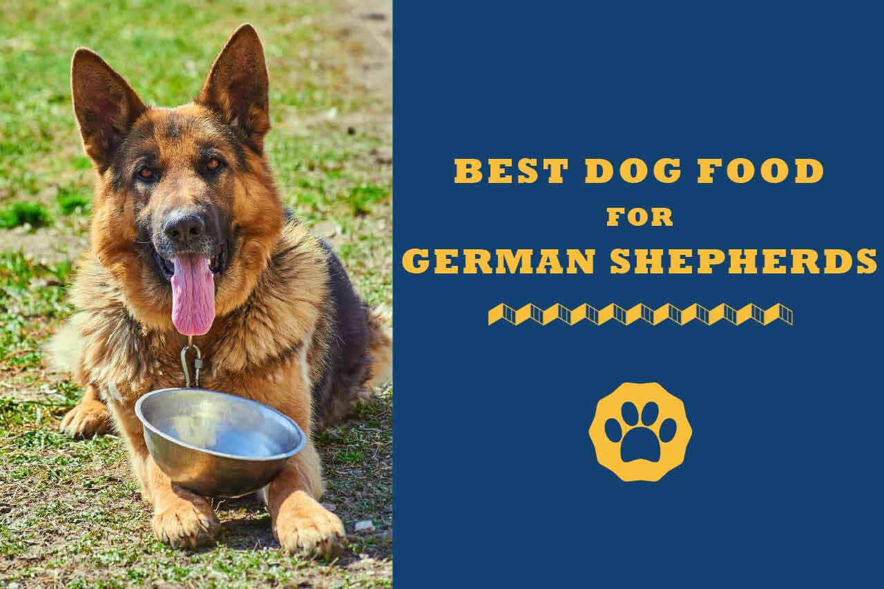 8 Best Dog Foods For German Shepherds In 2021 Totally Goldens