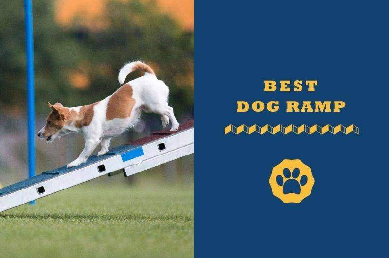 best dog ramp