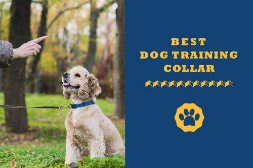 best dog training collar
