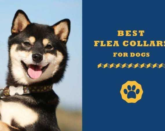 best flea collars for dogs