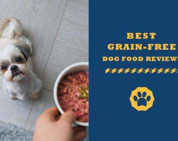 best grain free dog food reviews