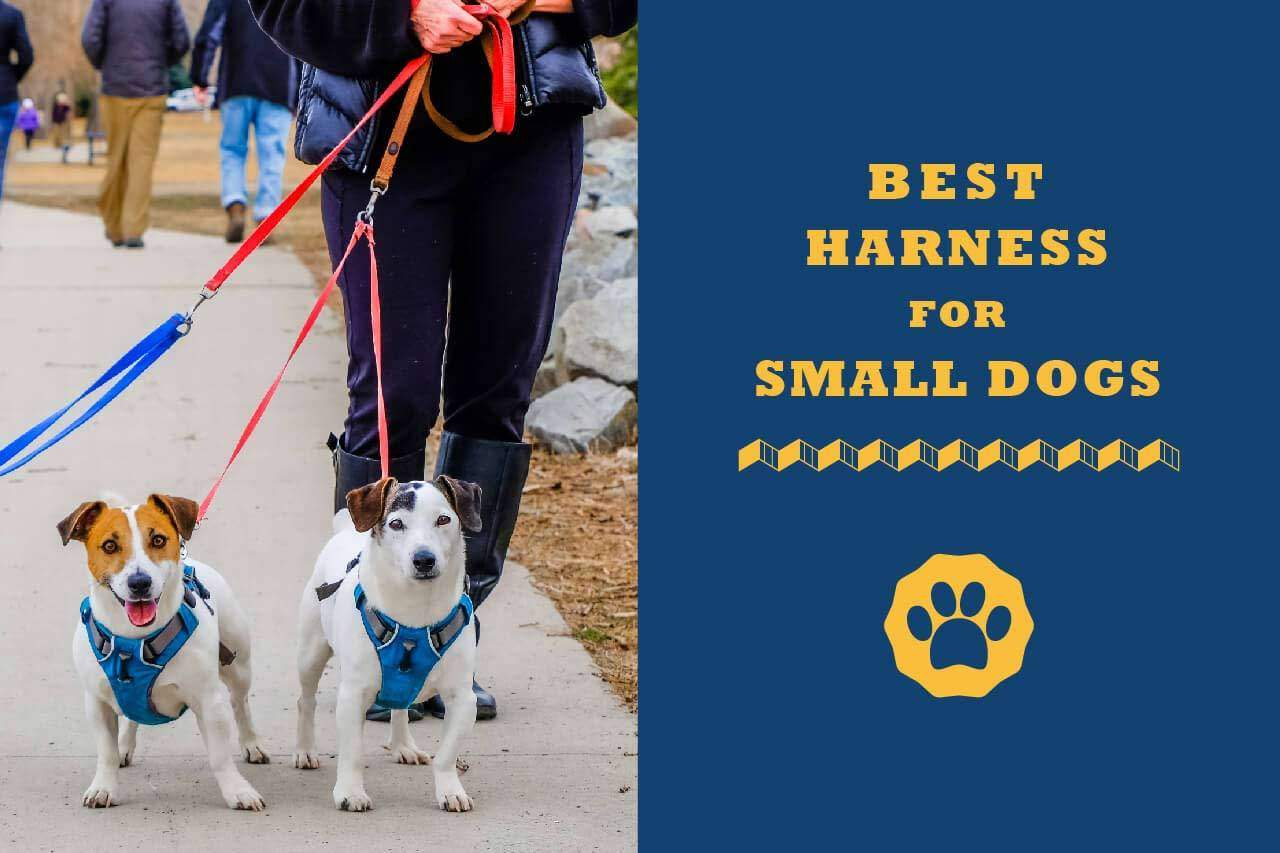 7 Best Harnesses For Small Dogs In 2020