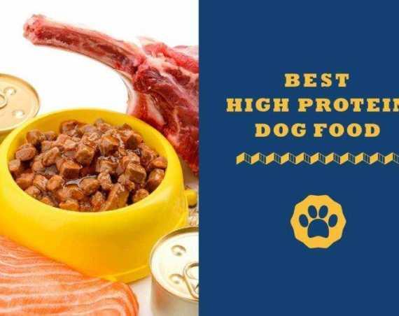 best high protein dog food