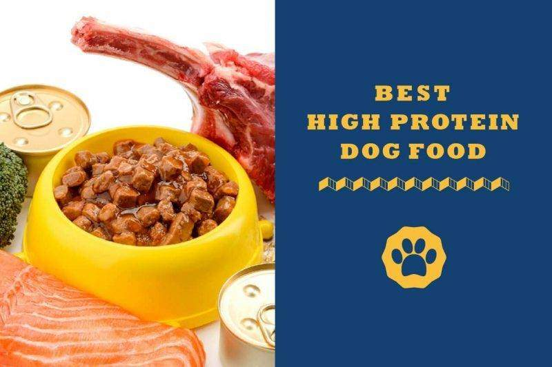 best high protein dog food