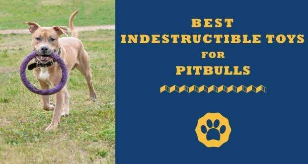 best indestructible toys for pitbulls