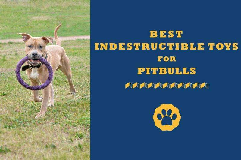 best indestructible toys for pitbulls