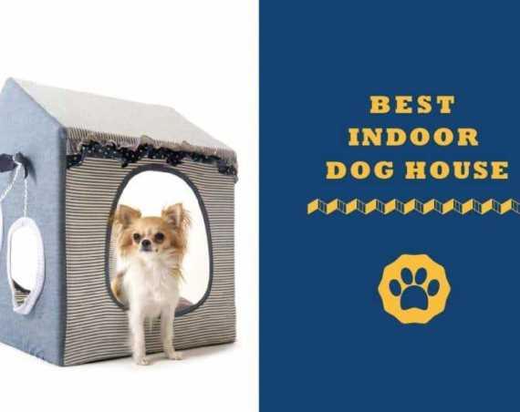 best indoor dog house
