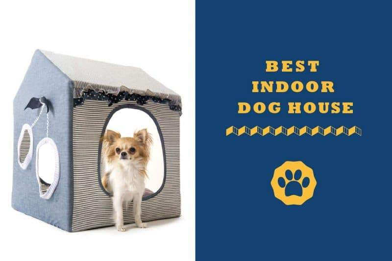 best indoor dog house