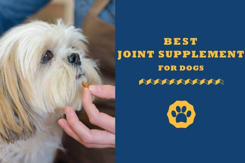 best joint supplement for dogs