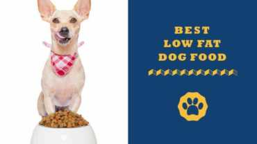 best low fat dog food