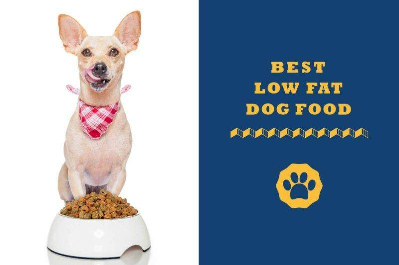 best low fat dog food