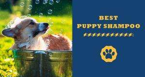 best puppy shampoo