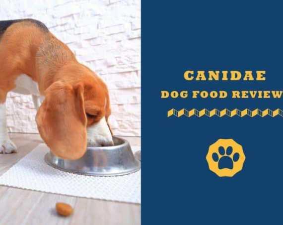 canidae dog food reviews