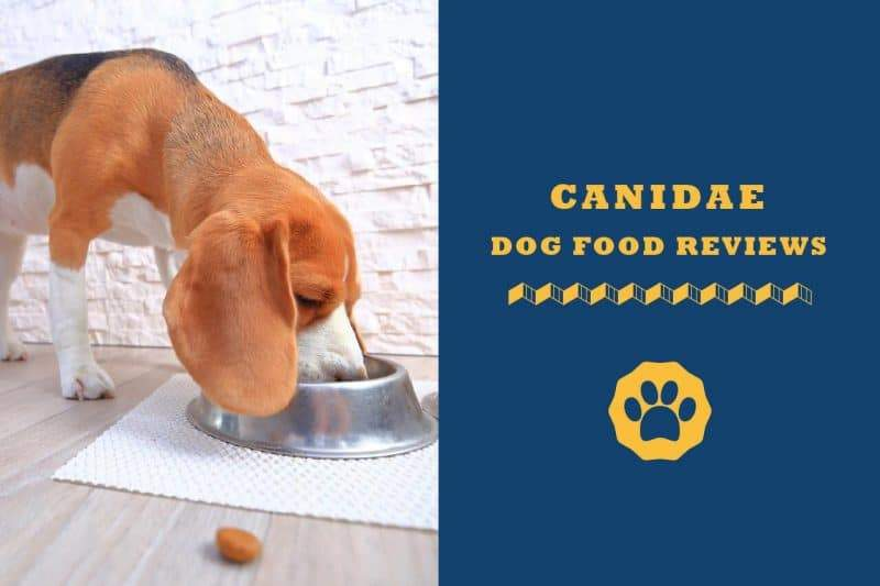 canidae dog food reviews