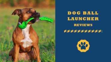 Dog ball launcher reviews