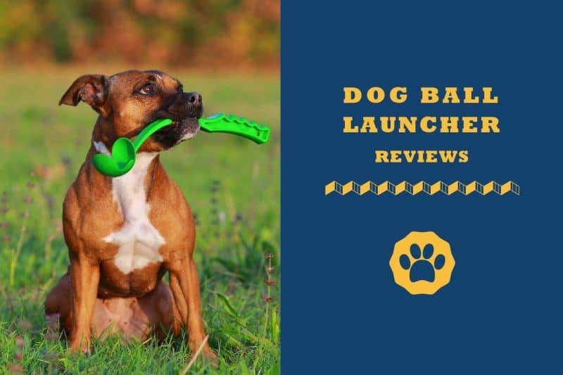 Dog ball launcher reviews