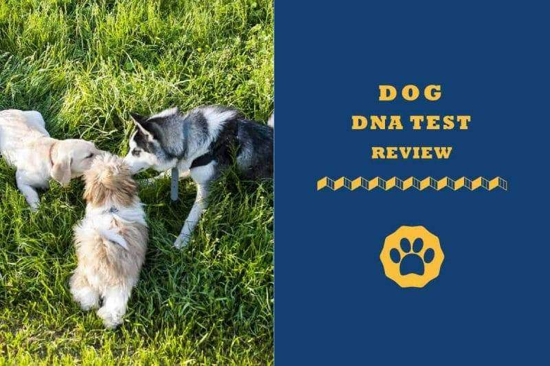 Dog DNA test review