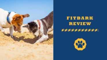 Best Dog Activity Monitors Yet