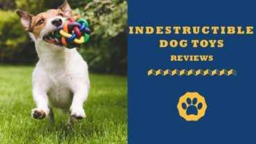 indestructible dog toys reviews