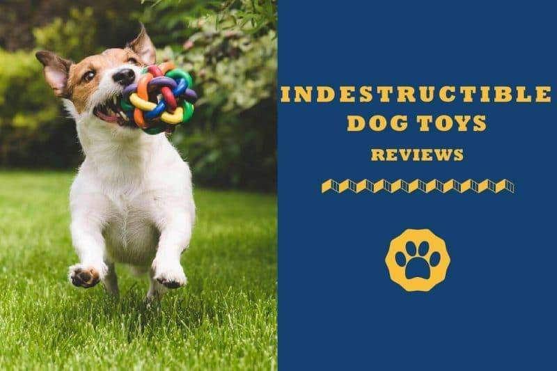 indestructible dog toys reviews