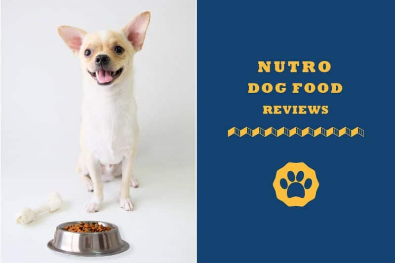 nutro dog food reviews