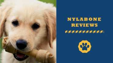 Nylabone Reviews Safest Dog Chew Toys Yet