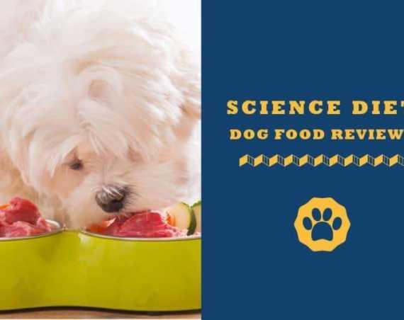 science diet dog food reviews
