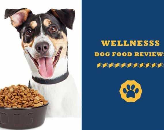 wellness dog food reviews
