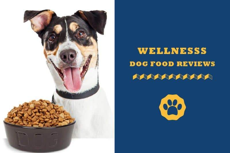 wellness dog food reviews