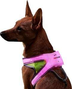 Noxgear LightHound Reflective Dog Harness