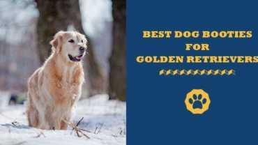 best dog booties for golden retrievers