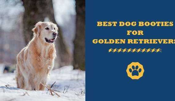 5 Best Dog Booties For Golden Retrievers