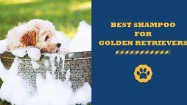best dog shampoos for golden retrievers