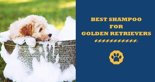 best dog shampoos for golden retrievers