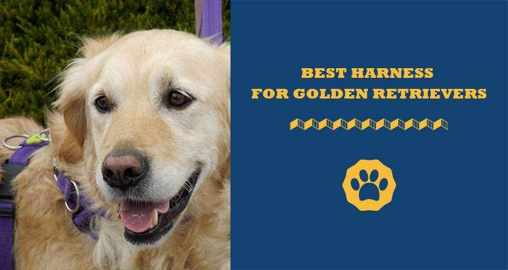 best harness for golden retriever