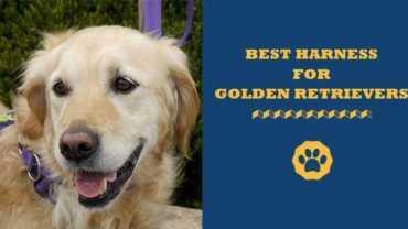 best harness for golden retrievers