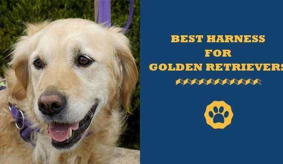 best harness for golden retrievers