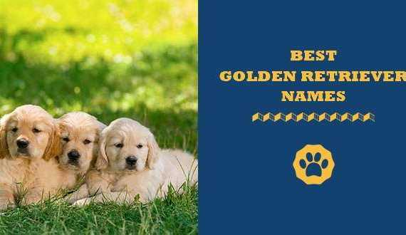 190 Cute & Unique Names for Golden Retriever
