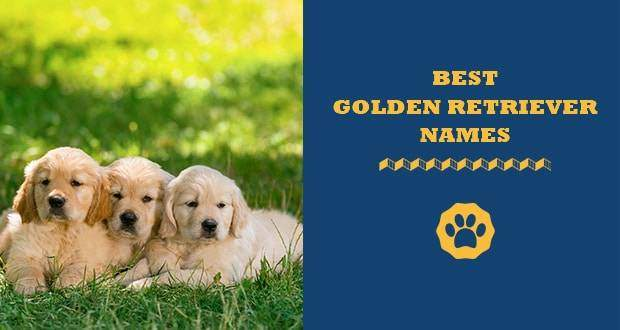 best golden retriever names