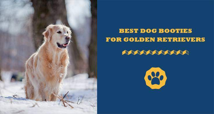 best dog booties for golden retrievers