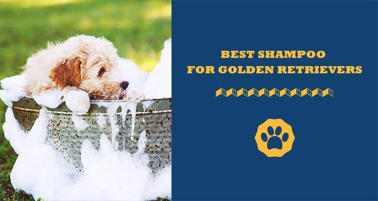 best shampoo for golden retrievers
