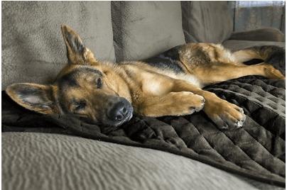 FurHaven ThermaNap Plush Velvet Self-Warming Dog Mat